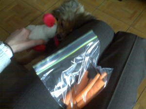 carrots and alfie