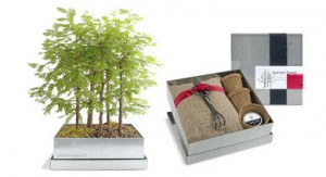 bonsai-tree-kit-l