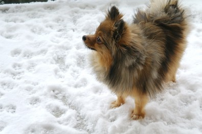 Alfie-in-the-snow
