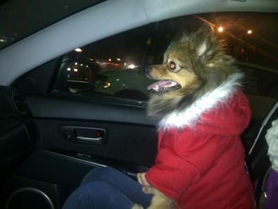 Alfie wearing Canada Pooch