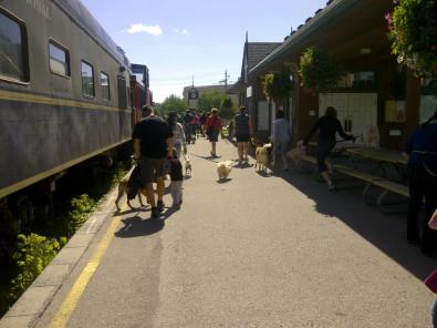 Large dog walk group