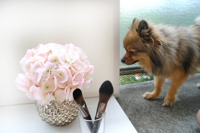 alfie-smelling-brushes