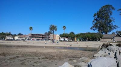 Capitola palm trees on beach