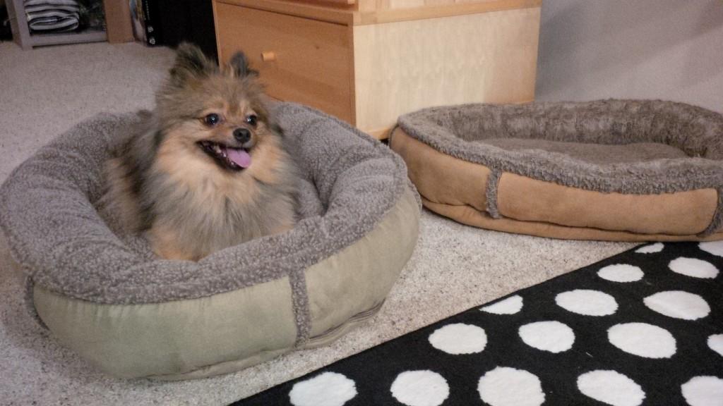 Alfies new bed