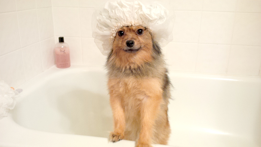 Alfie-shower-cap-1
