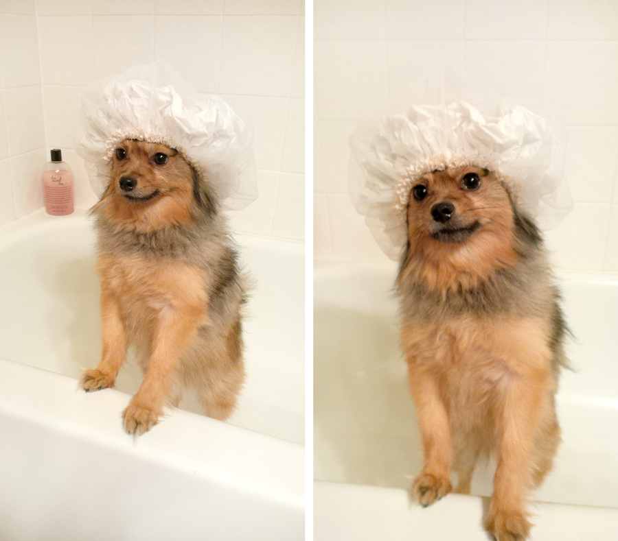 Alfie-shower-cap-2