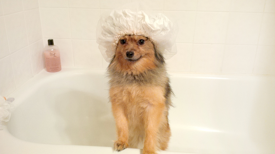 Alfie-shower-cap-3