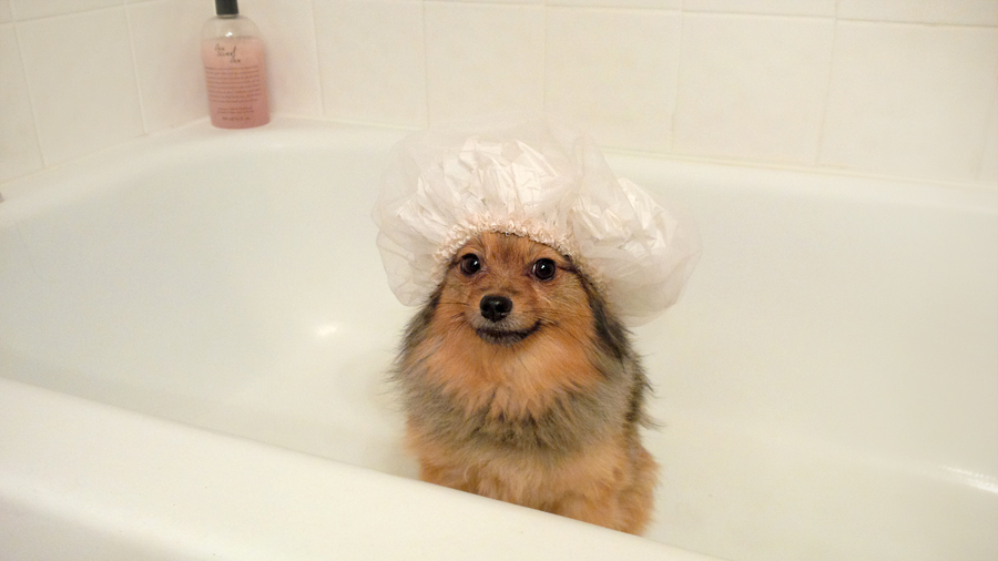 Alfie-shower-cap-5