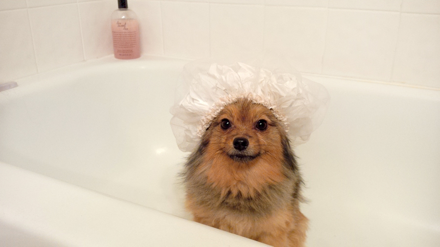 Alfie-shower-cap-6