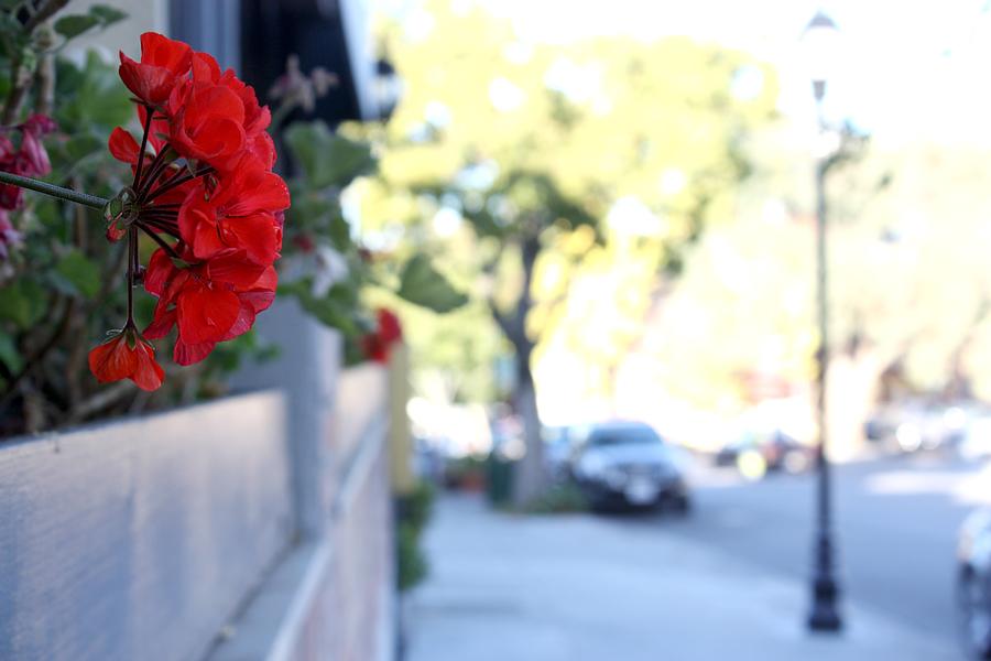 Flowers-in-Saratoga