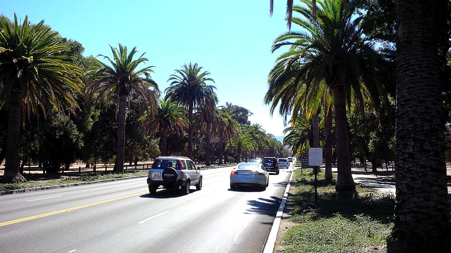 Palm-Drive
