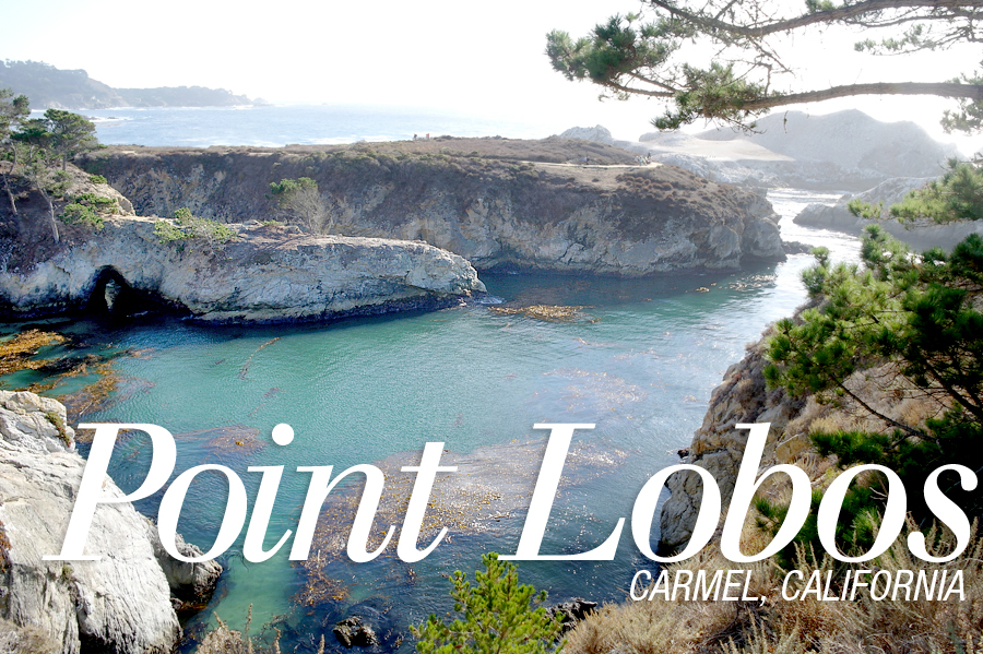 Point-Lobos-header