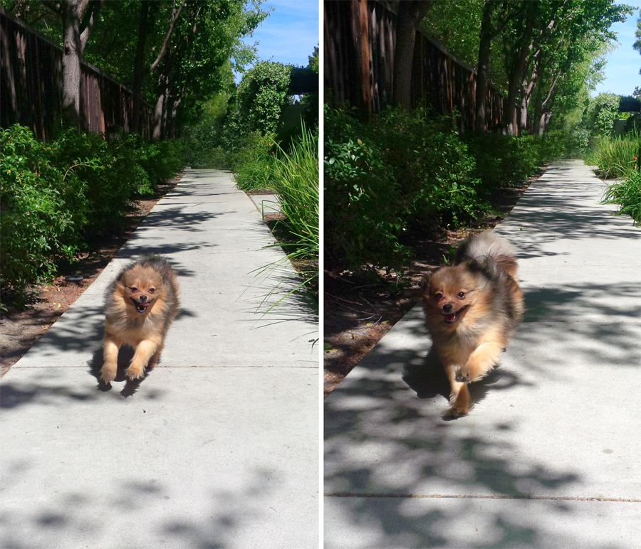 Walking-Alfie-2