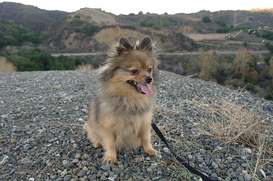Alfie-on-the-rocks