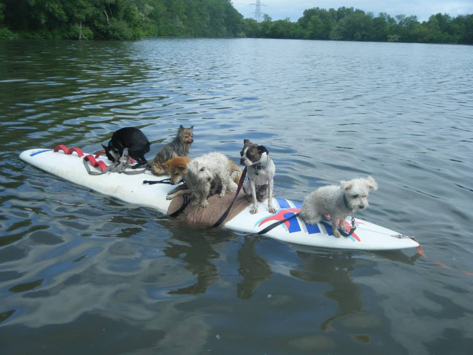 Dogs on surf board
