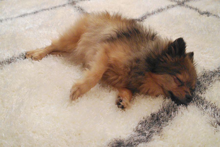 Alfie-napping-on-rug