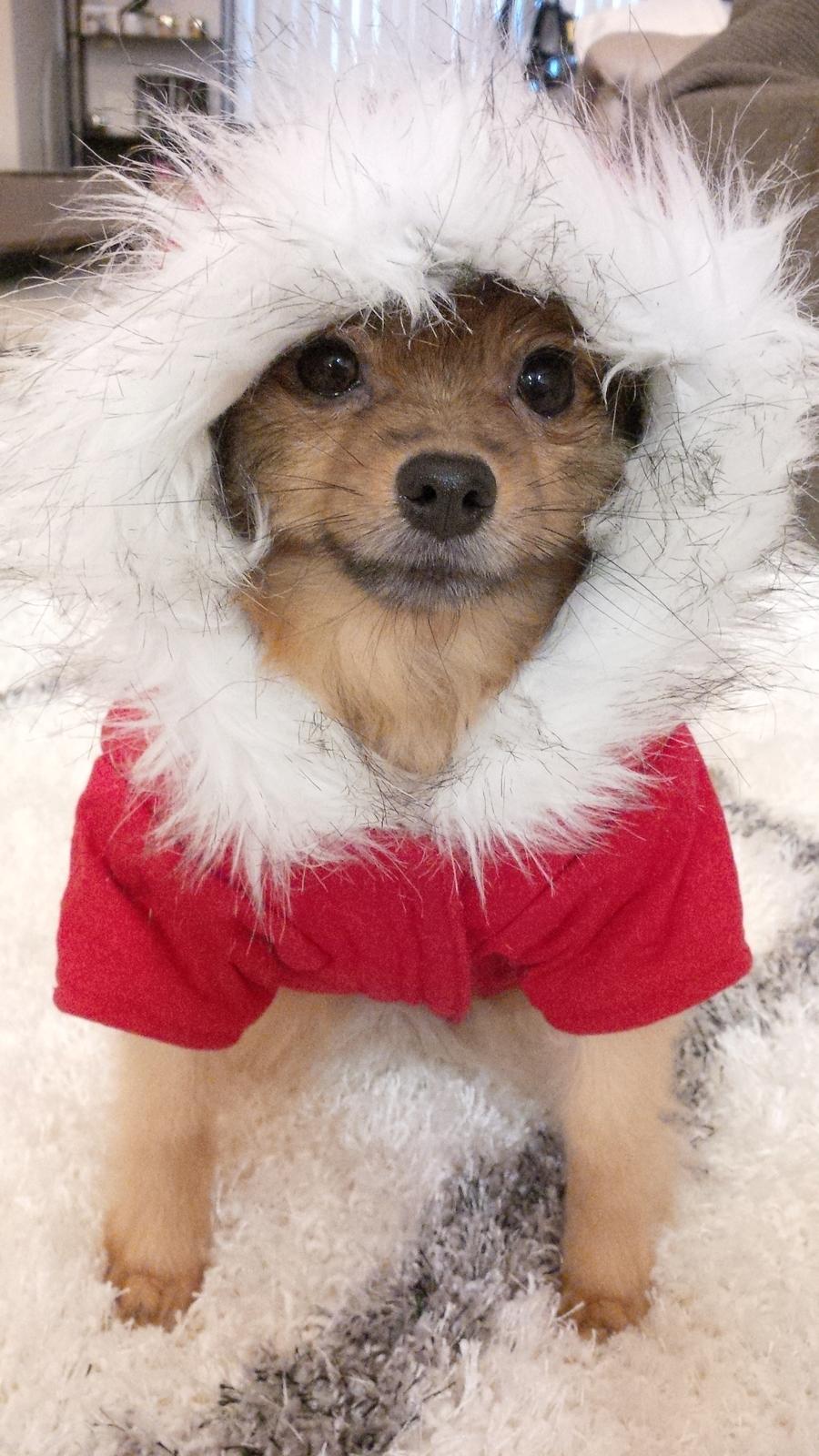 Christmas-Alfie