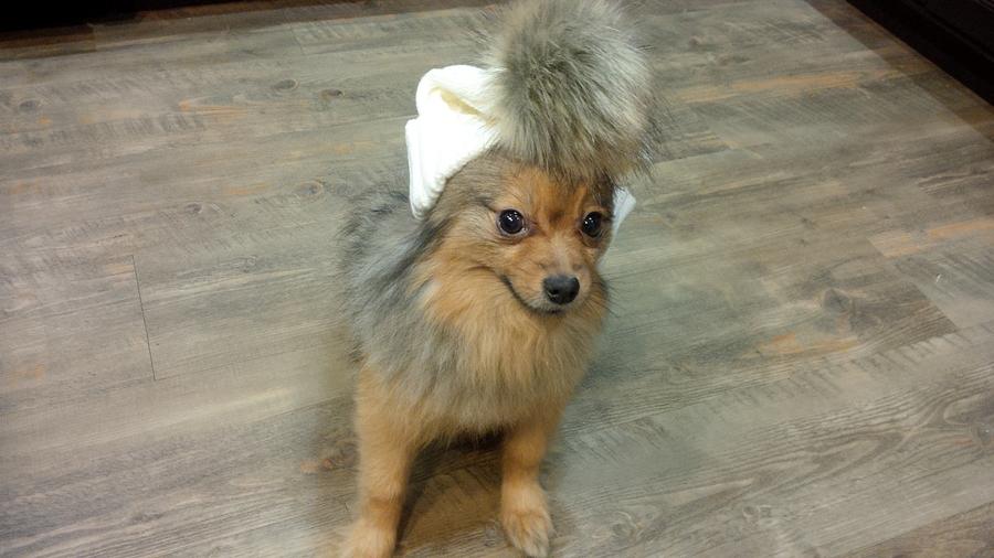 Alfie-pompom-hat
