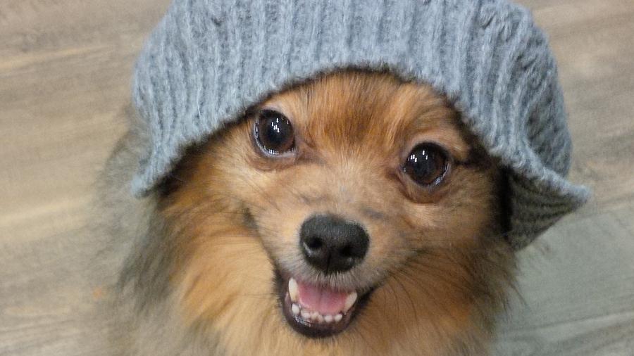 Alfie-smiles