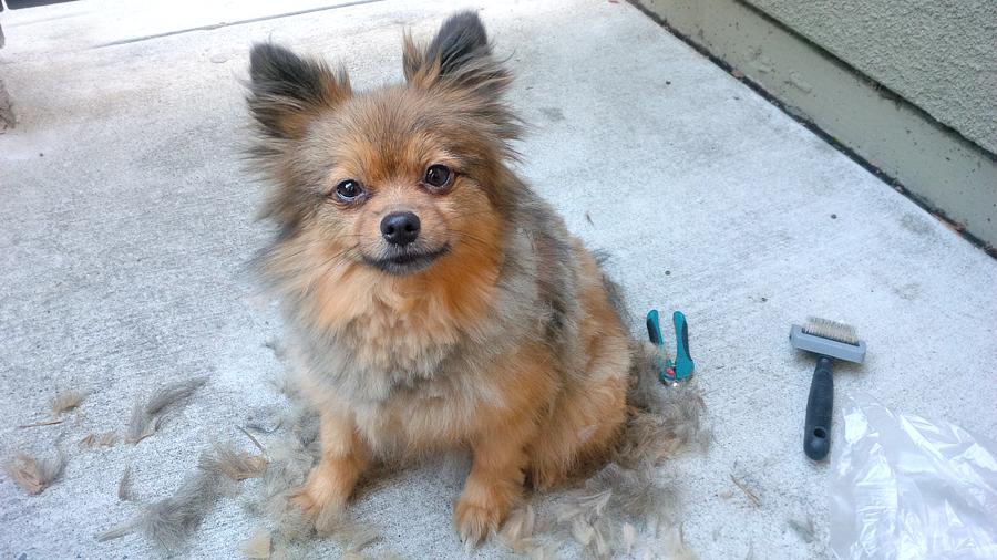 Alfie-during-haircut