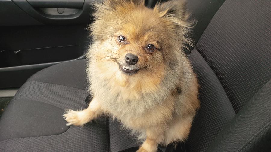 Alfie-in-Car
