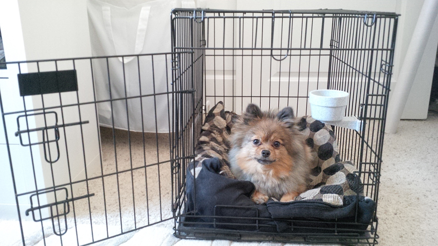 Alfie-in-a-crate
