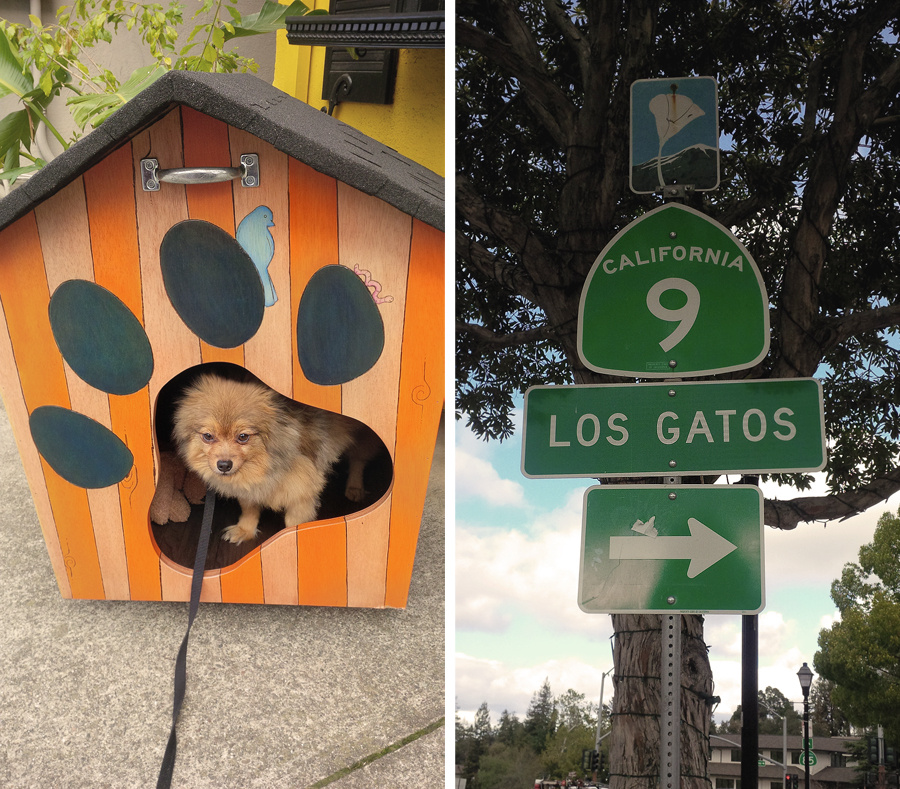 Alfie-in-doghouse
