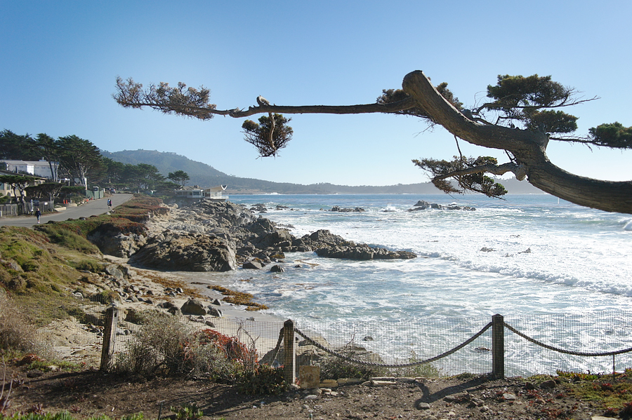 Carmel-with-funny-tree