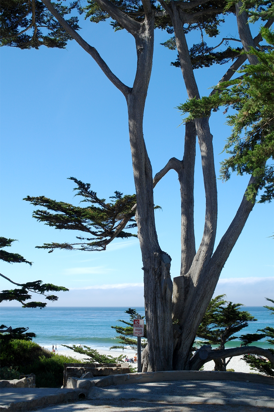 Tree-on-Beach