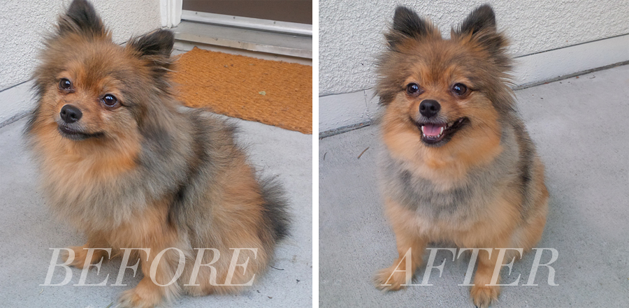 before-after-dog-haircut