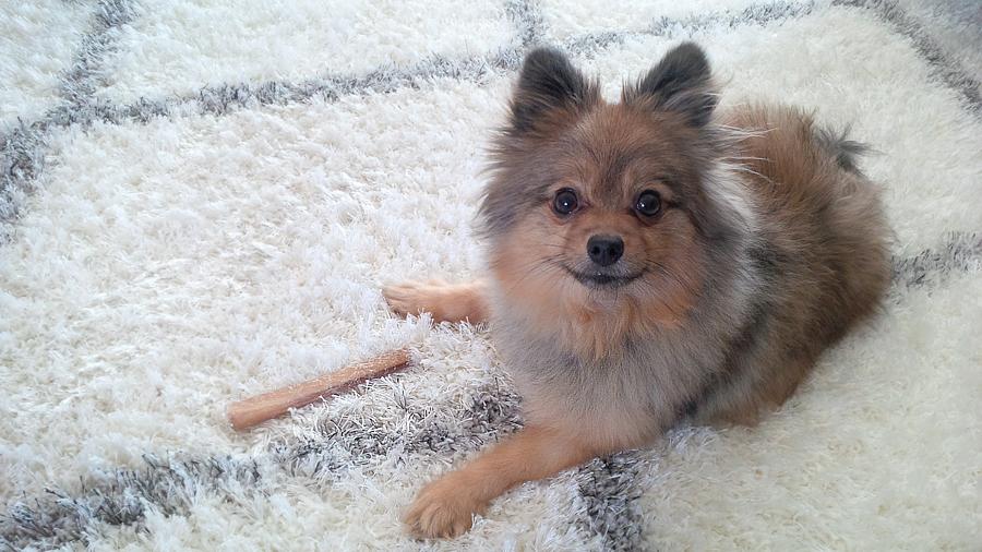 Alfie-with-bone