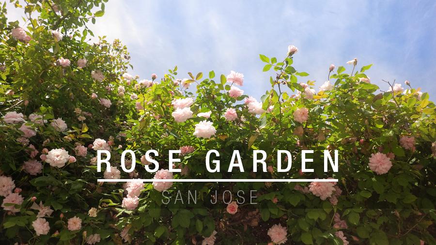 Rose-Garden-header