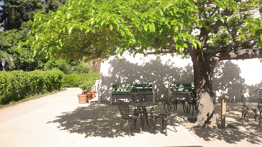 Table-chairs-under-tree