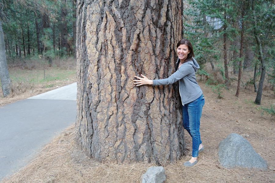 Yosemite-trees