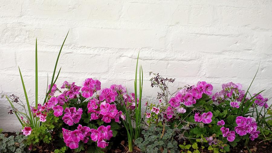 Carmel-flowers