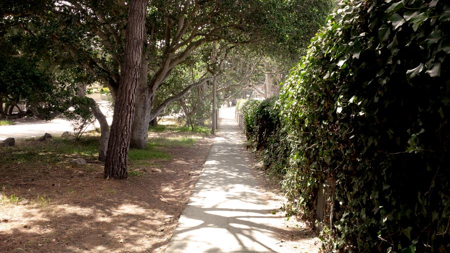 Carmel-woods
