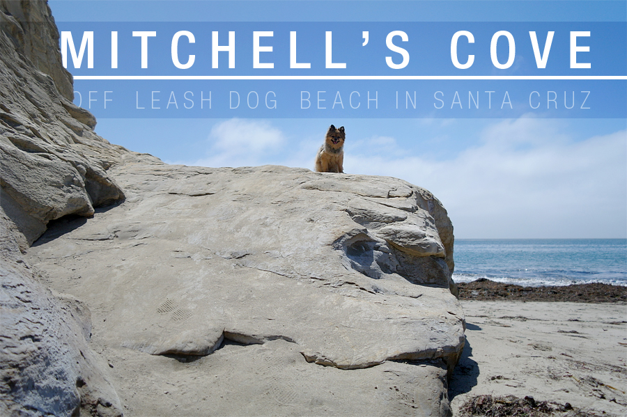 Mitchells-Cove-header