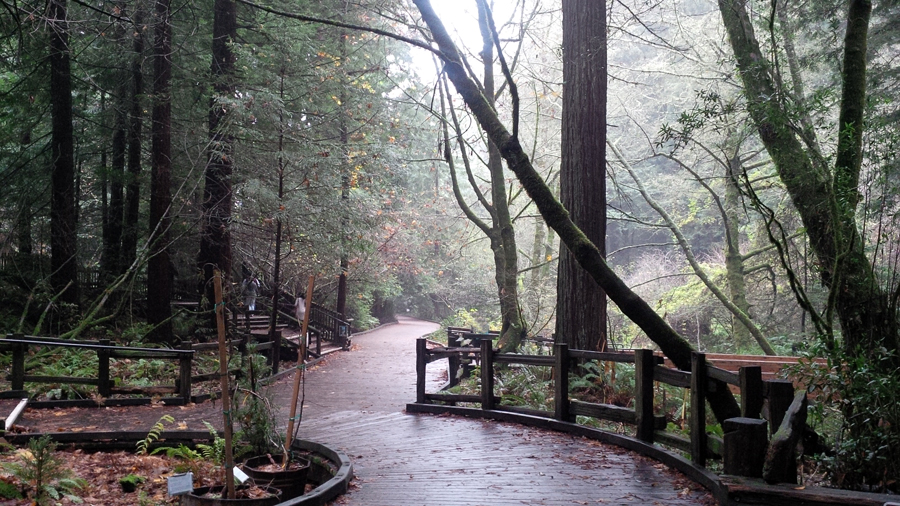 SF-Muir-Woods