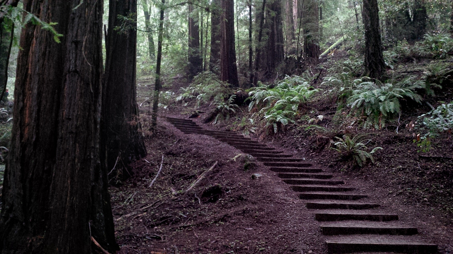 trails-of-Muir-Woods