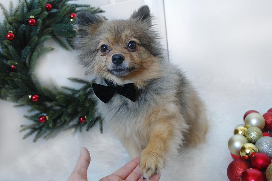 Christmas-paw