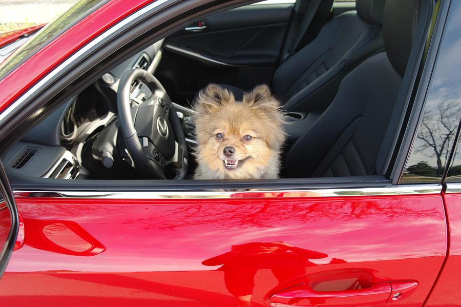 Alfie-in-Lexus