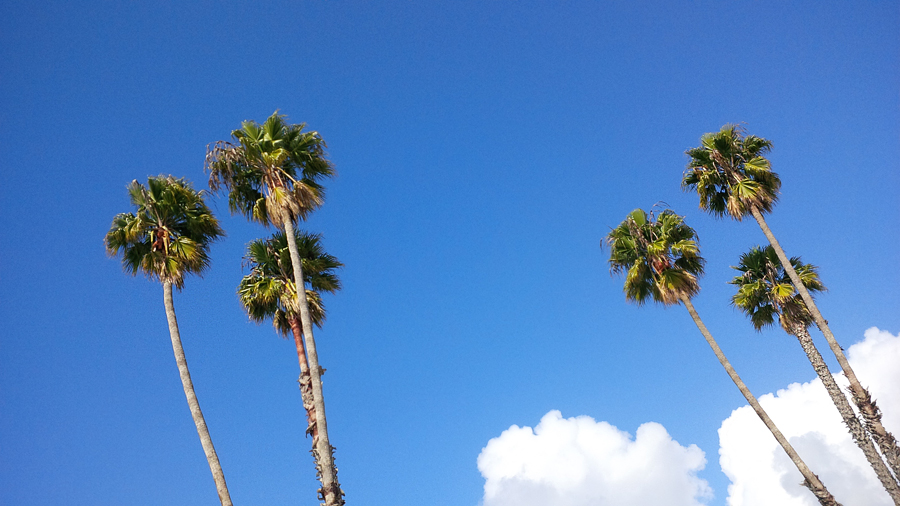 Palm-trees-in-SantaCruz