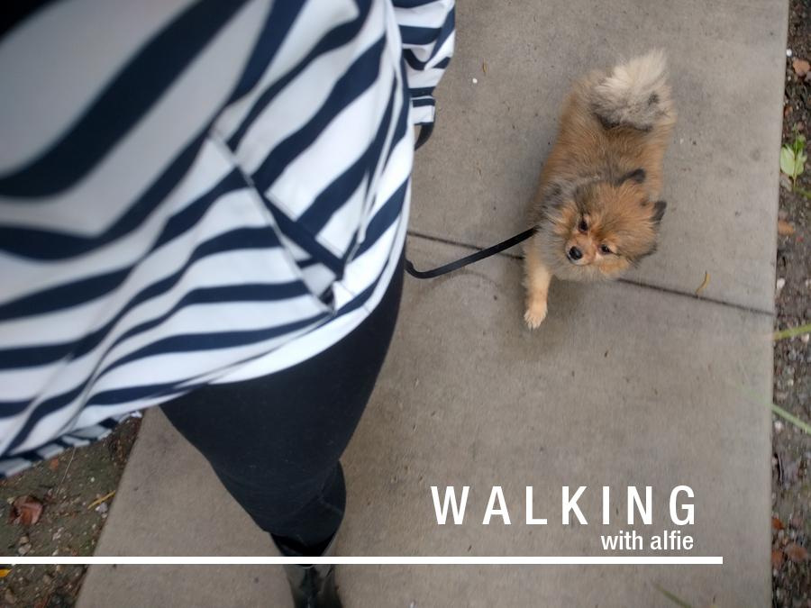 Alfie-walks