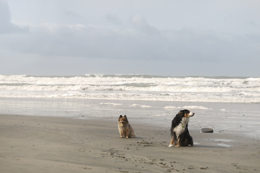 2-pals-on-beach