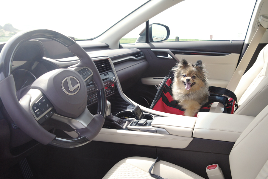 Alfie-passenger