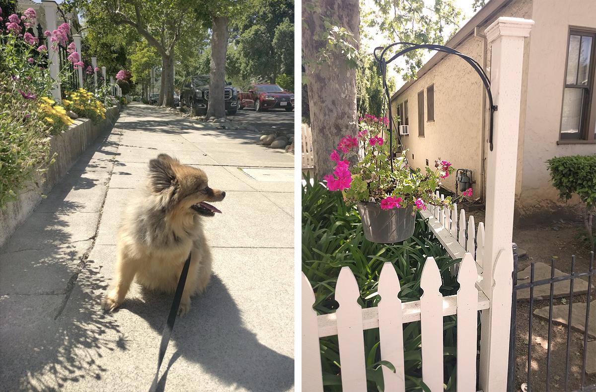 Alfie-sidewalk