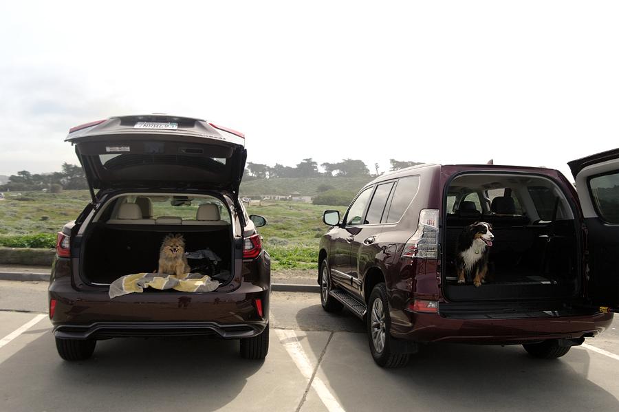 Pups-in-trunk