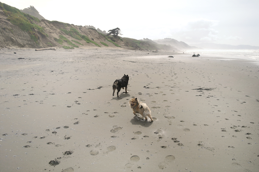 running-pups