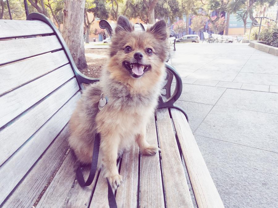 Alfie-bench