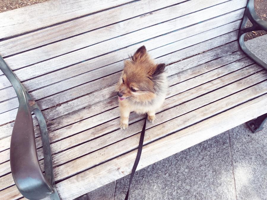 Alfie-on-bench